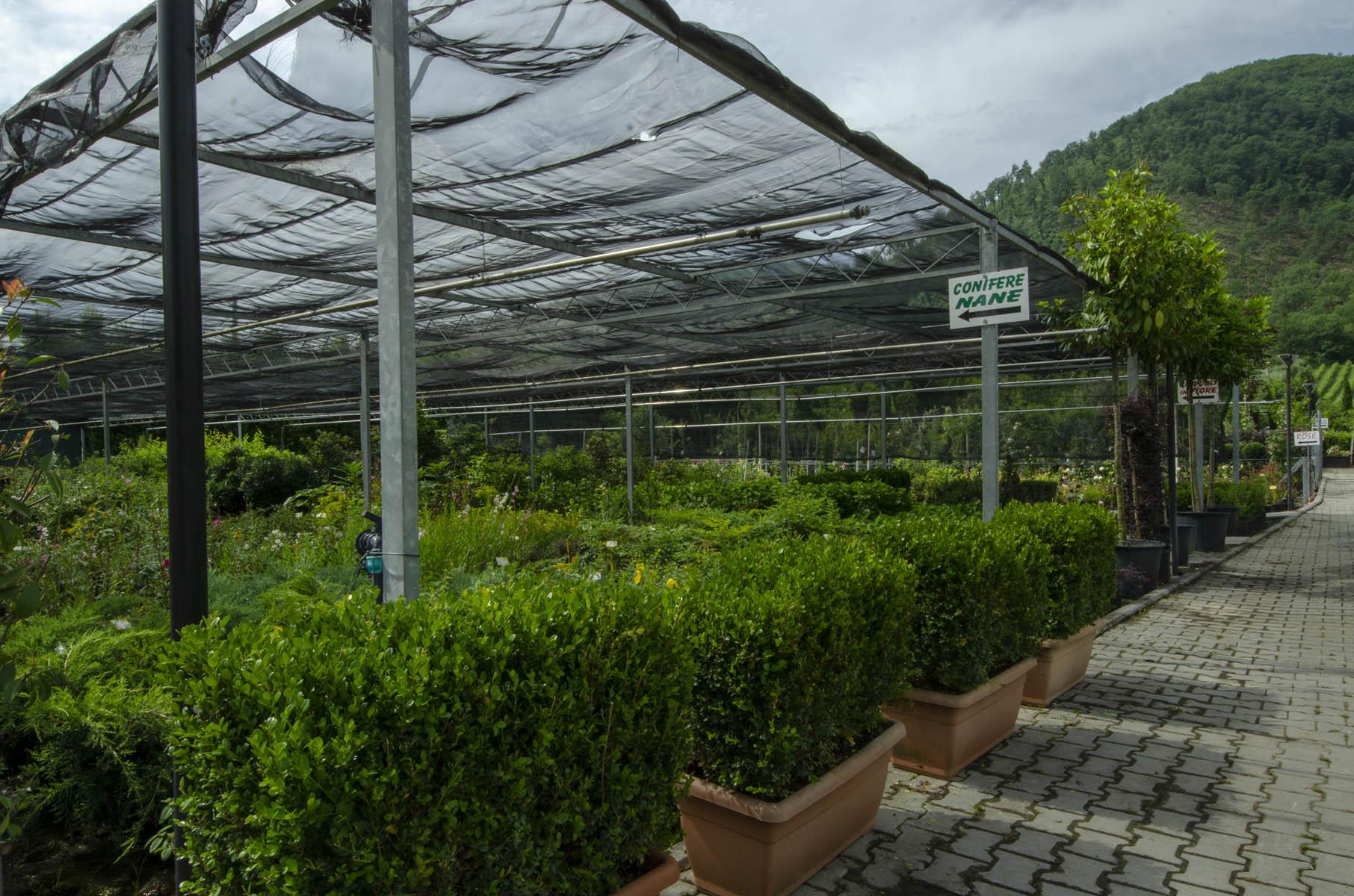 Piante Grasse Da Giardino vivaio di rosano - vendita piante e fiori | vivaio di rosano